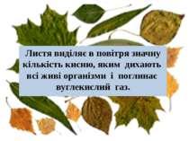 Листя виділяє в повітря значну кількість кисню, яким дихають всі живі організ...