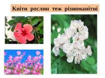 Квіти рослин теж різноманітні
