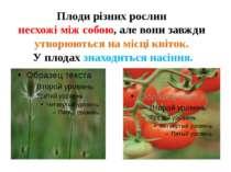 Плоди різних рослин несхожі між собою, але вони завжди утворюються на місці к...