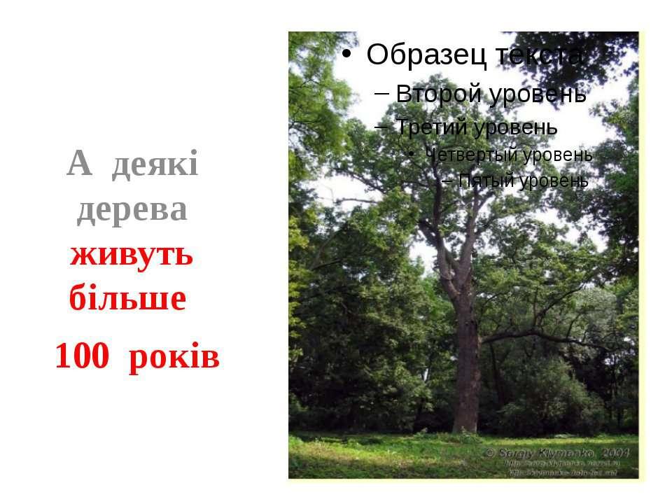 А деякі дерева живуть більше 100 років