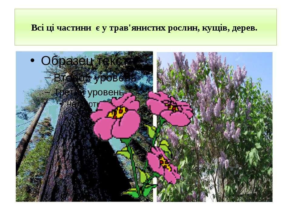Всі ці частини є у трав'янистих рослин, кущів, дерев.