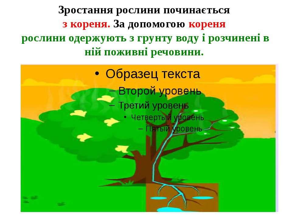 Зростання рослини починається з кореня.За допомогою кореня рослини одержують...