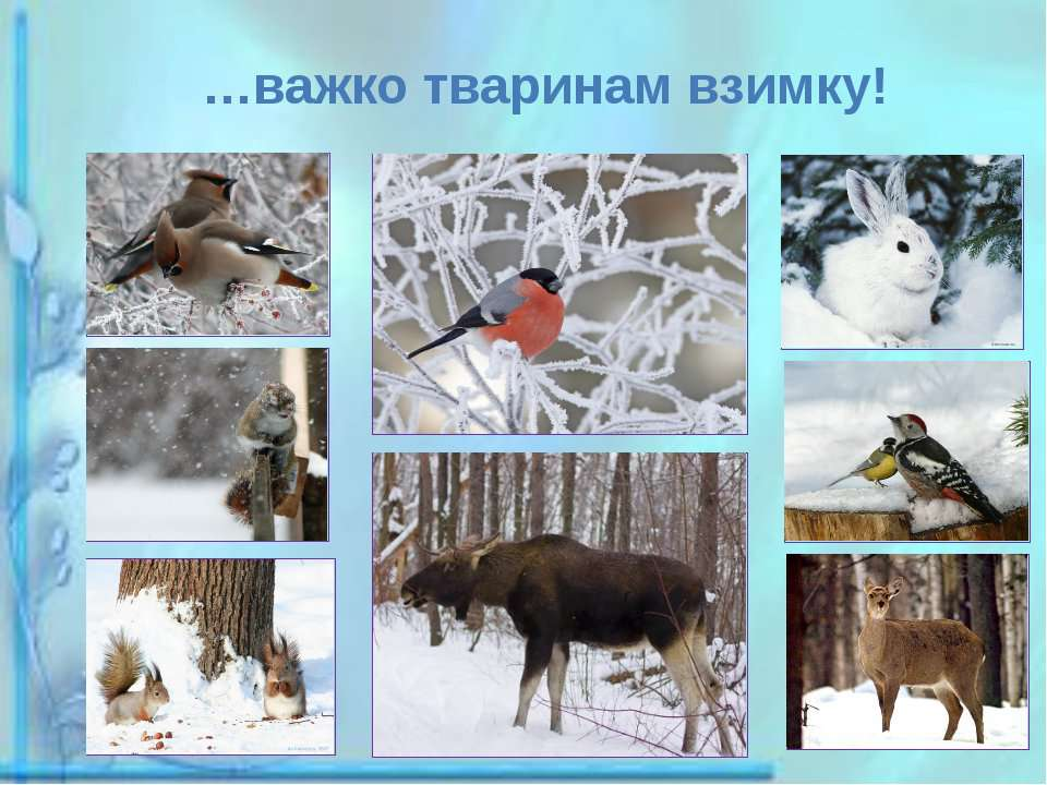 …важко тваринам взимку!