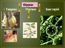Віруси Тварин Рослин Бактерій
