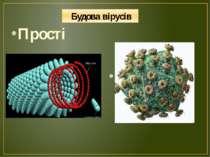 Будова вірусів Прості Складні