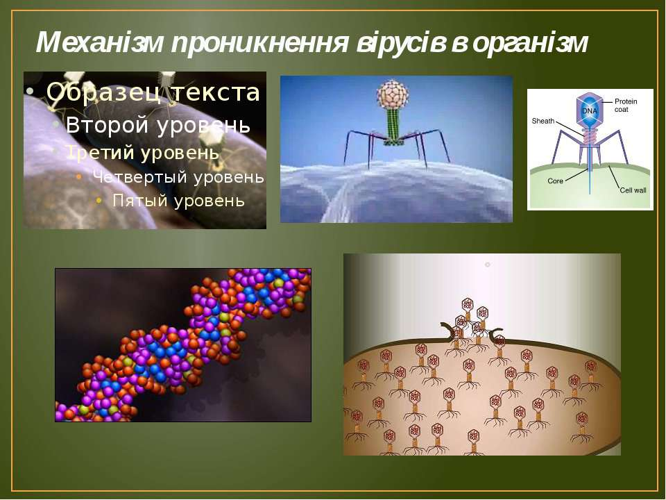 Механізм проникнення вірусів в організм