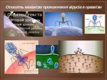 Опишіть механізм проникнення вірусів в організм