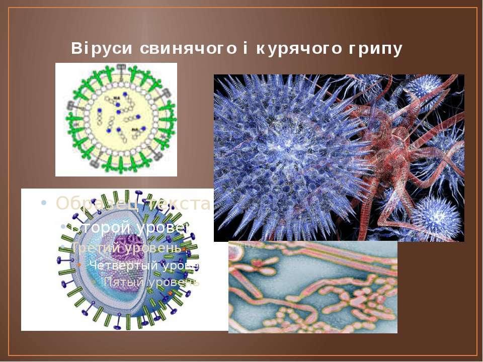 Віруси свинячого і курячого грипу