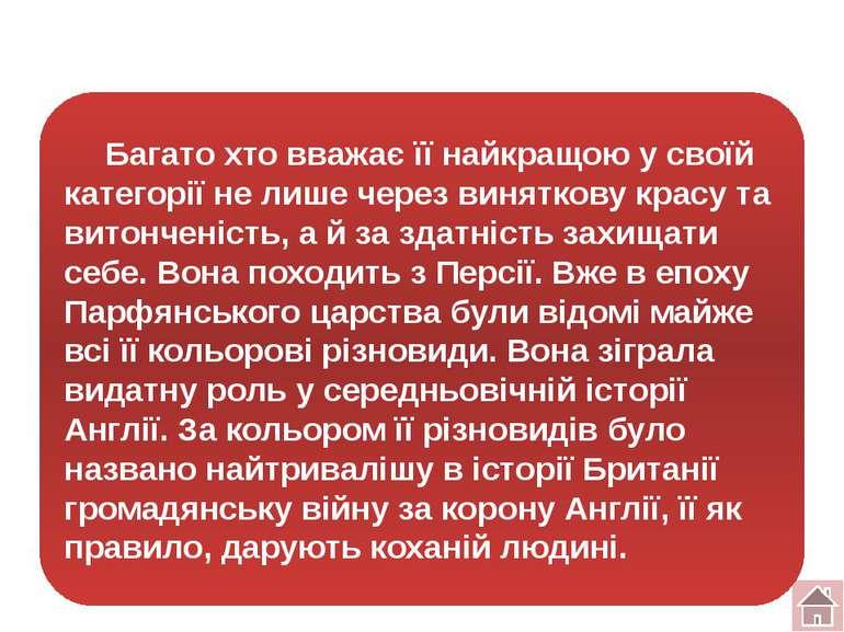 "Тур № 4 Конкурс ""Анаграми"""