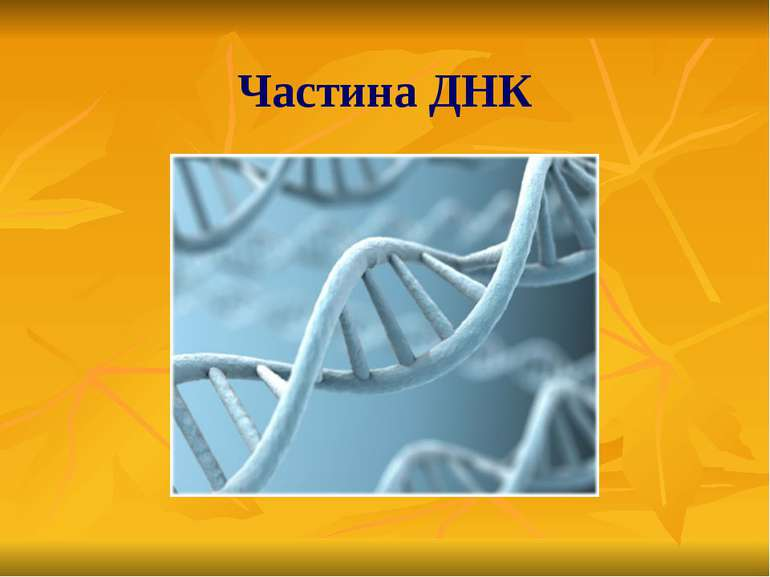 Частина ДНК