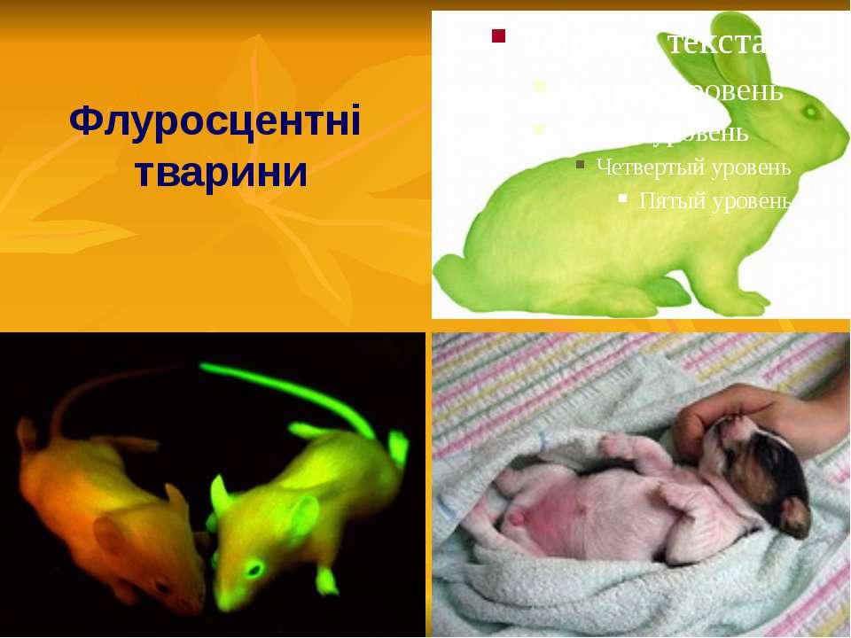 Флуросцентні тварини
