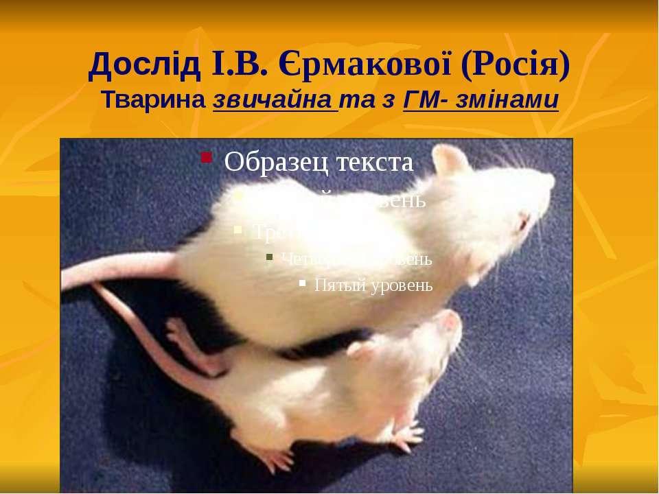 Дослід І.В. Єрмакової (Росія) Тварина звичайна та з ГМ- змінами