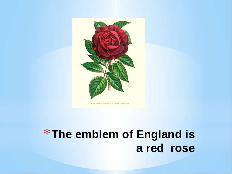 The emblem of England is a red rose