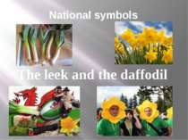 National symbols The leek and the daffodil
