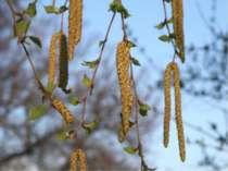 ІІ група Квітень - починають квітнути різні рослини;