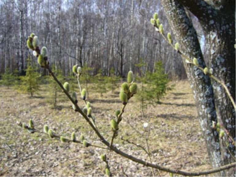 З поданих слів складіть прислів'я. рік годує. день Весняний (Весняний день рі...
