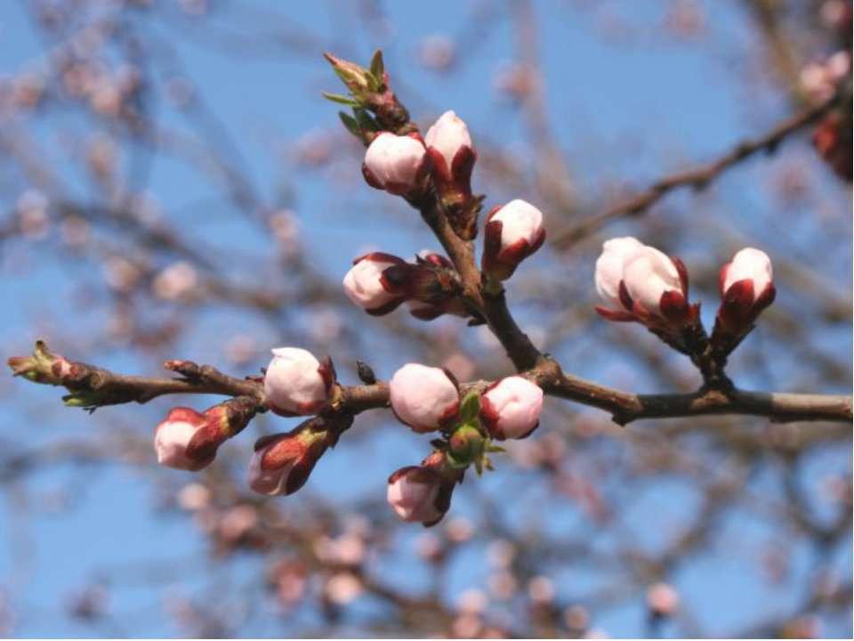 ІІІ група Травень - «буяють», тобто ростуть великі і соковиті трави.