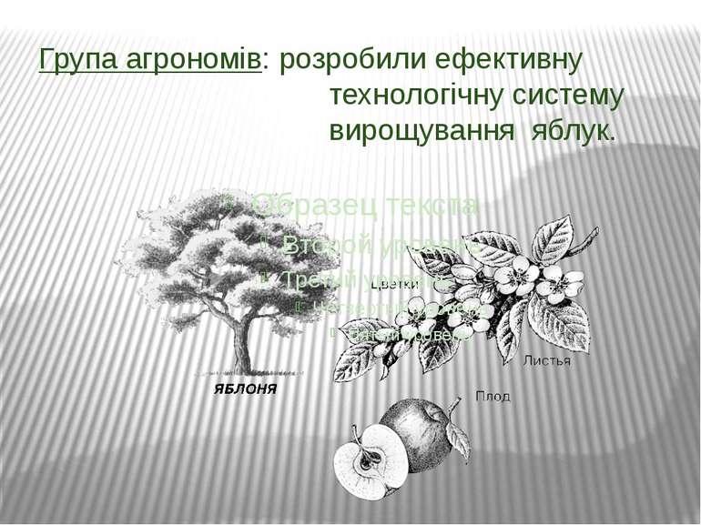 Група агрономів: розробили ефективну технологічну систему вирощування яблук.