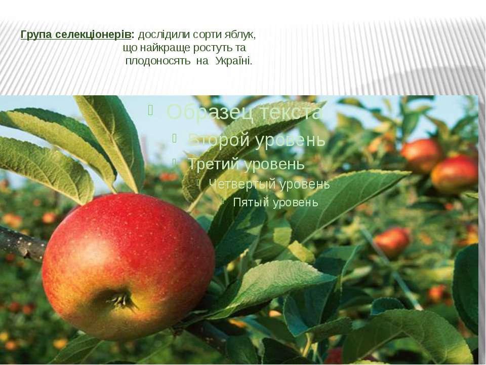 Група селекціонерів: дослідили сорти яблук, що найкраще ростуть та плодоносят...