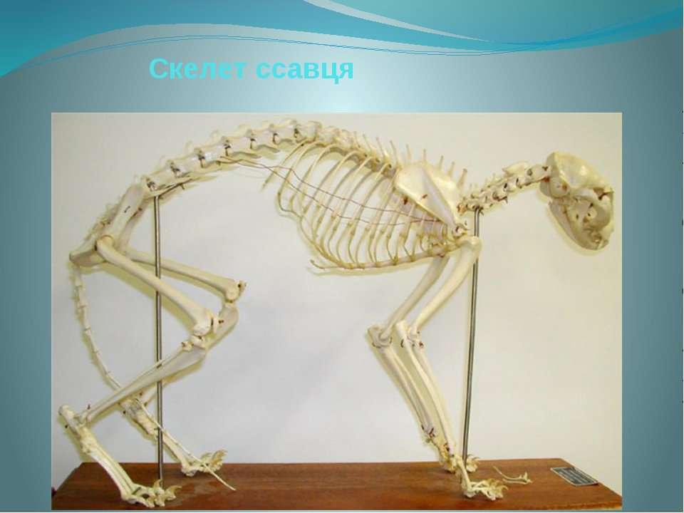 Скелет ссавця
