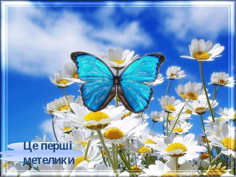 Це перші метелики