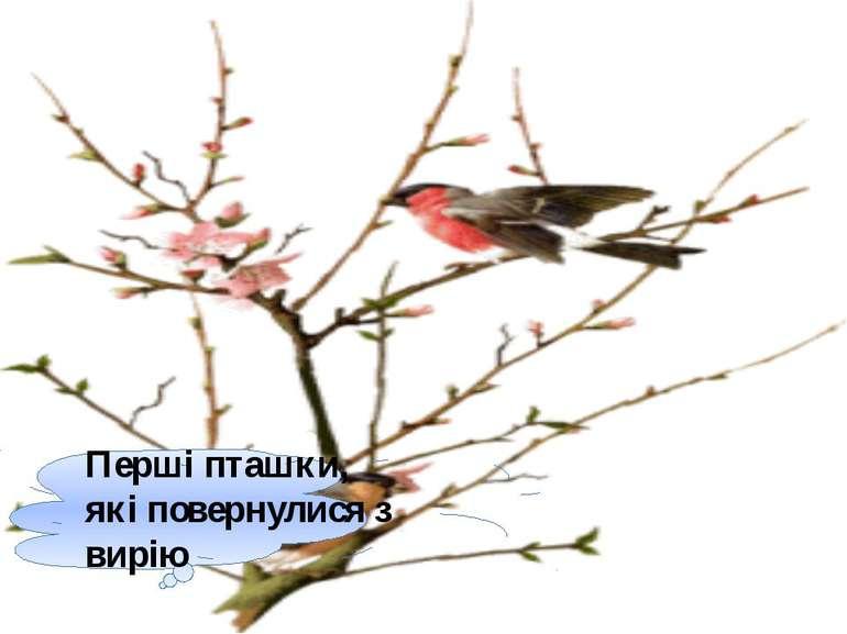 Перші пташки, які повернулися з вирію