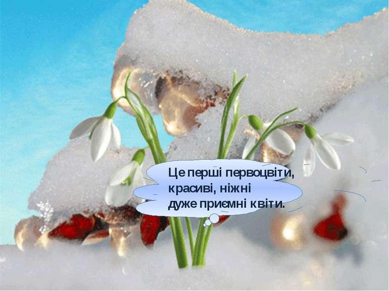 Це перші первоцвіти, красиві, ніжні дуже приємні квіти.