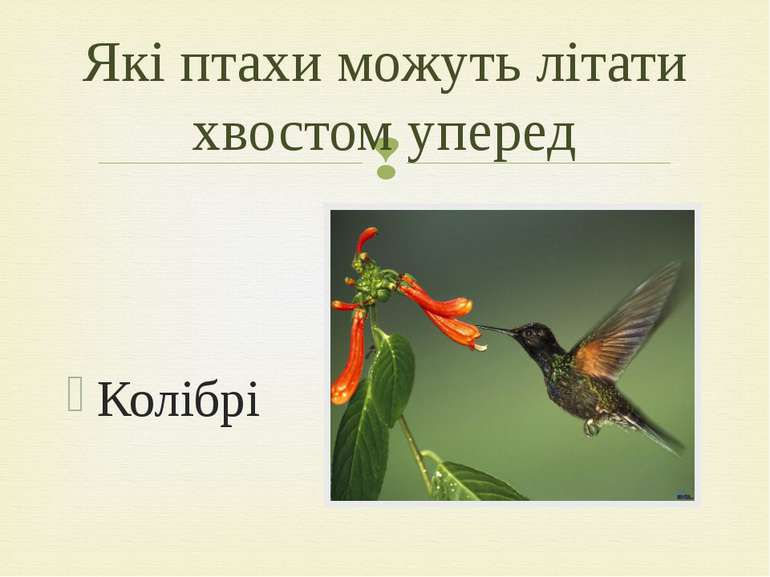 Колібрі Які птахи можуть літати хвостом уперед
