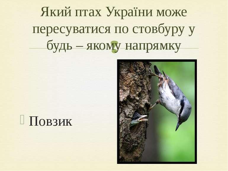 Повзик Який птах України може пересуватися по стовбуру у будь – якому напрямку