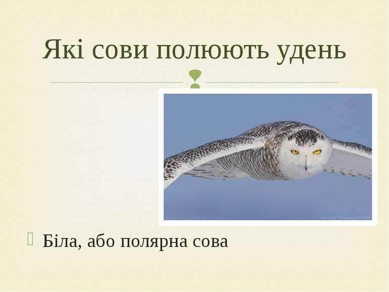 Біла, або полярна сова Які сови полюють удень