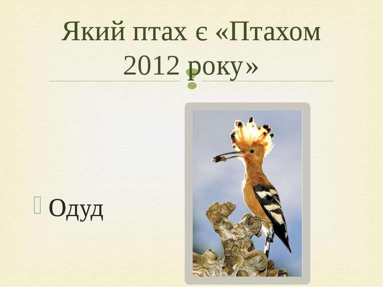 Одуд Який птах є «Птахом 2012 року»