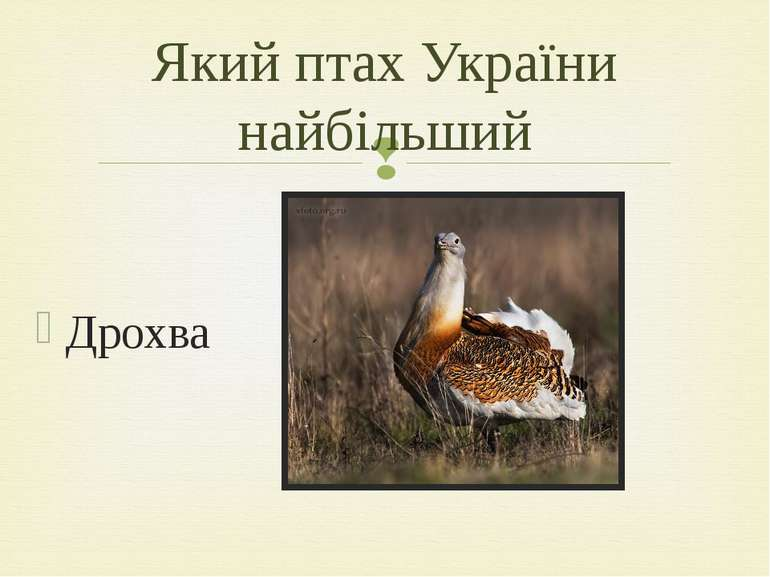 Дрохва Який птах України найбільший