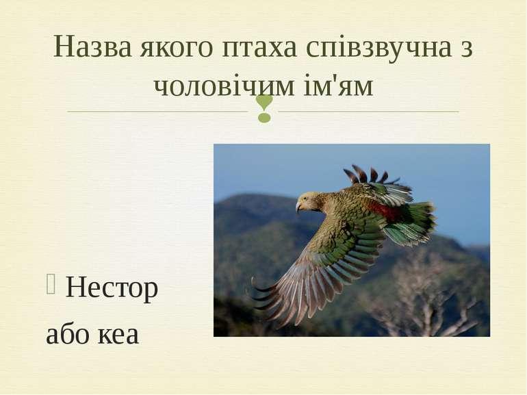 Нестор або кеа Назва якого птаха співзвучна з чоловічим ім'ям