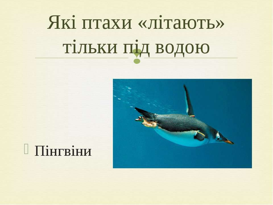 Пінгвіни Які птахи «літають» тільки під водою