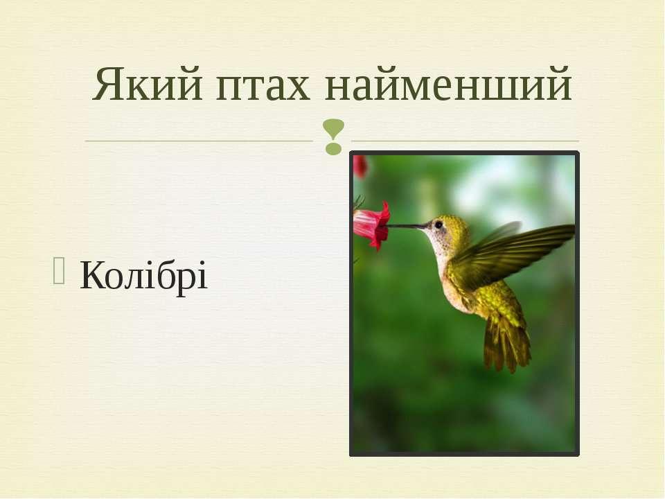 Колібрі Який птах найменший