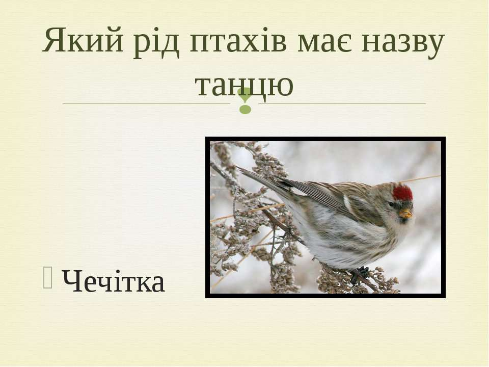 Чечітка Який рід птахів має назву танцю