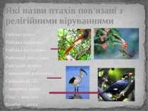 Які назви птахів пов'язані з релігійними віруваннями Райські птахи Райська уд...