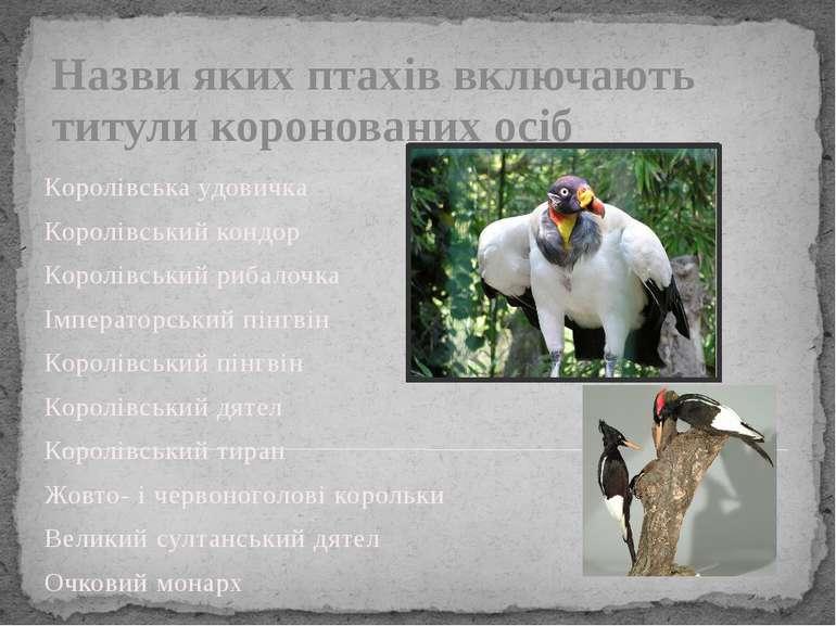 Назви яких птахів включають титули коронованих осіб Королівська удовичка Коро...