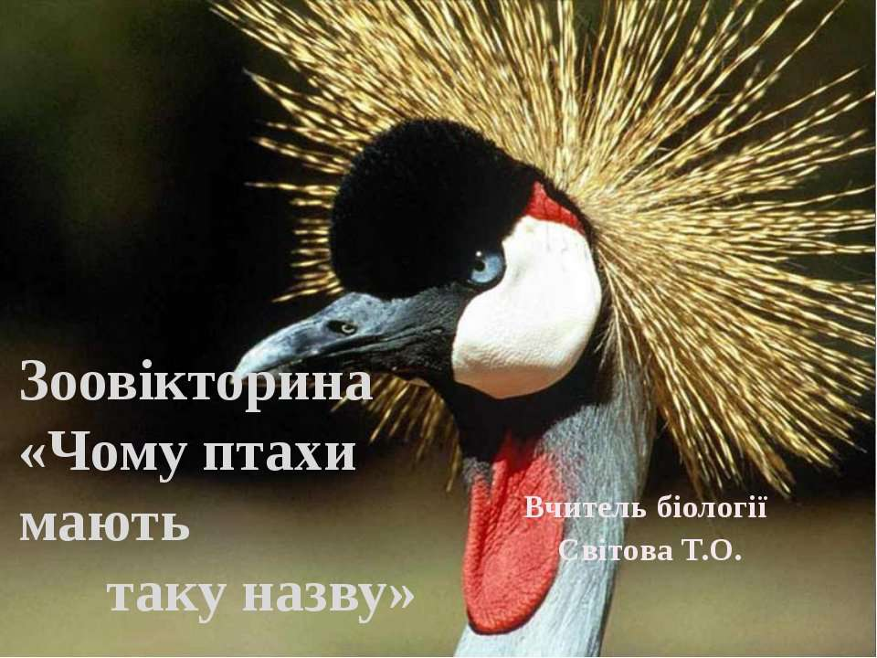 Вчитель біології Світова Т.О. Зоовікторина «Чому птахи мають таку назву»