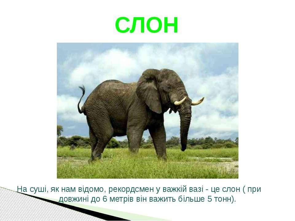 На суші, як нам відомо, рекордсмен у важкій вазі - це слон ( при довжині до 6...