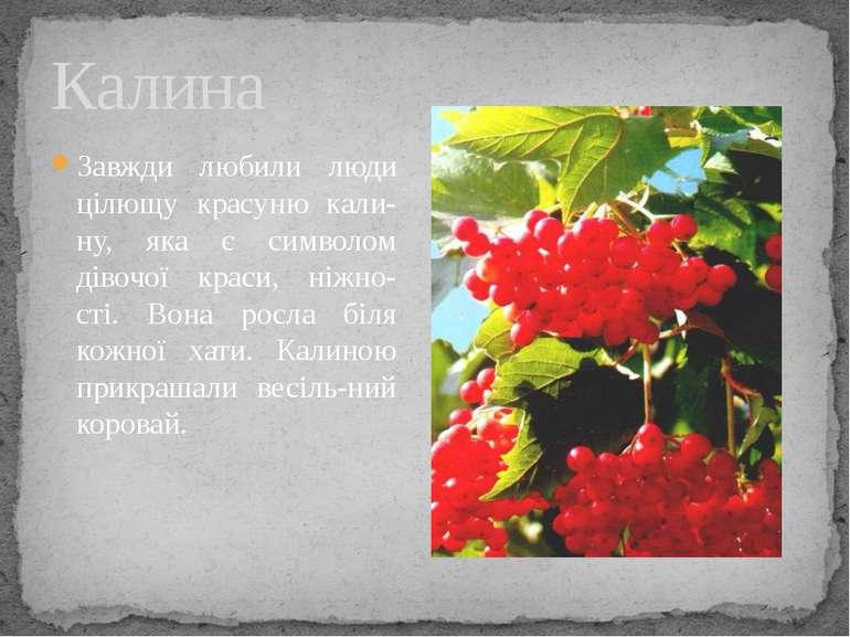 Калина Завжди любили люди цілющу красуню кали-ну, яка є символом дівочої крас...