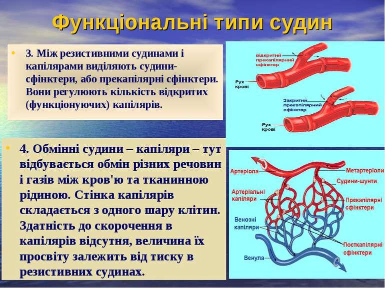 Функціональні типи судин 3. Між резистивними судинами і капілярами виділяють ...