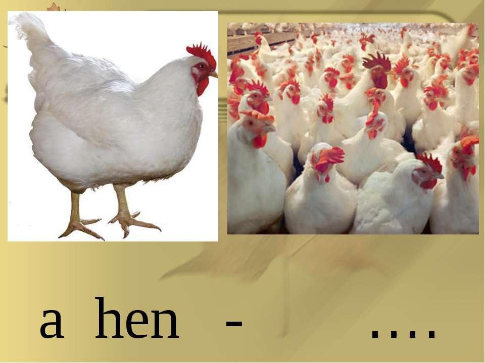 a hen - ….