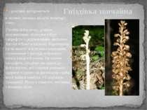 Гніздівка звичайна - розсіяно зустрічається в лісових масивах по всій територ...