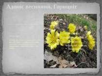 Adonis vernalis Міжнародна латинська назва роду походить від імені міфічного ...