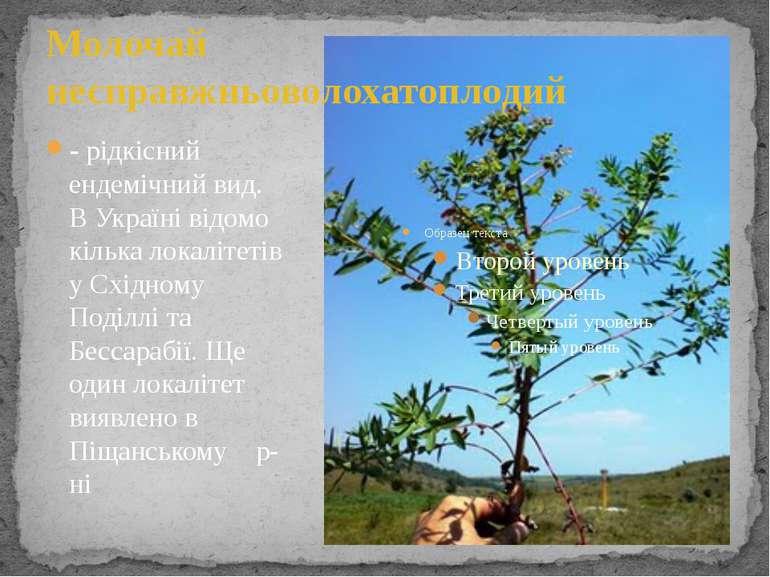 Молочай несправжньоволохатоплодий - рідкісний ендемічний вид. В Україні відом...