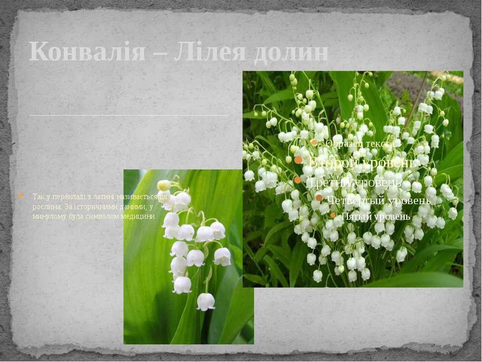 Так у перекладі з латині називається ця рослина. За історичними даними, у мин...