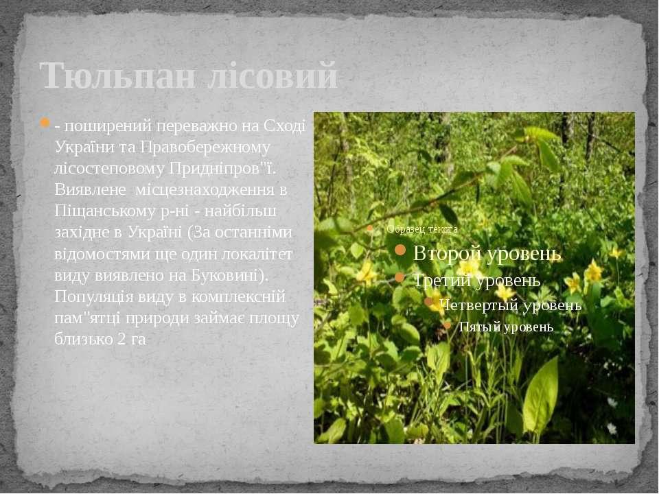 Тюльпан лісовий - поширений переважно на Сході України та Правобережному лісо...