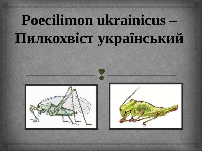 Poecilimon ukrainicus – Пилкохвіст український