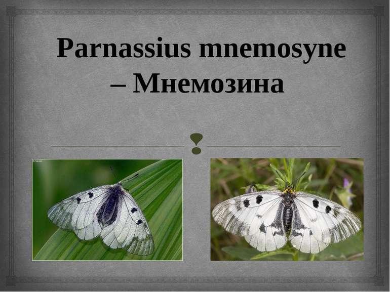 Parnassius mnemosyne – Мнемозина